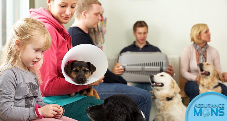 Asurance animaux de compagnie